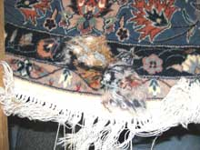 Rug repair in Thornhill (reweaving)